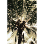 Personal - Palm Tree